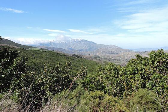 Malerische Landschaft auf Kreta: Dichte Wälder werden durch schroffe Berglandschaften abgelöst.